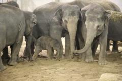 Bebe-elephant-dans-le-groupe-PDZ