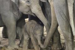 Elephanteau-de-Soraya-PDZ