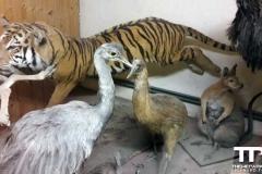 Olmense-zoo-(10)