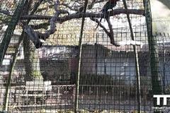 Olmense-zoo-(23)