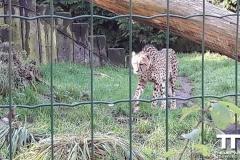 Olmense-zoo-(33)