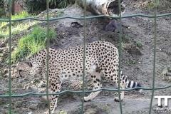 Olmense-zoo-(34)