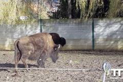 Olmense-zoo-(36)