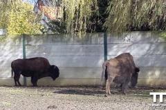 Olmense-zoo-(37)
