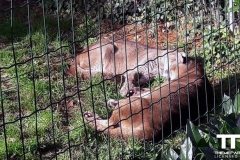 Olmense-zoo-(38)