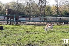 Olmense-zoo-(42)