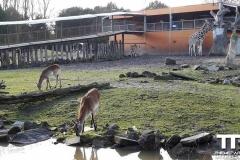 Olmense-zoo-(45)