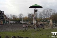 Olmense-zoo-(47)