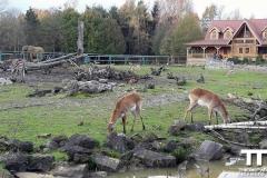 Olmense-zoo-(48)