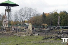 Olmense-zoo-(49)