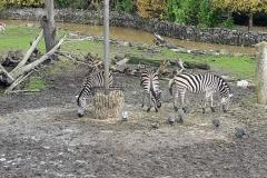 Olmense-zoo-(51)