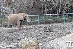 Olmense-zoo-(52)