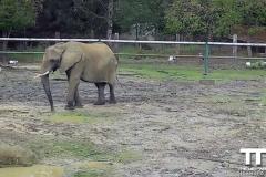 Olmense-zoo-(53)