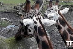 Olmense-zoo-(54)
