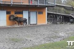 Olmense-zoo-(56)