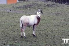 Olmense-zoo-(58)