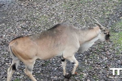 Olmense-zoo-(60)
