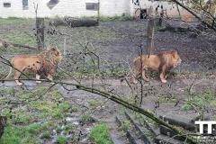 Olmense-zoo-(68)