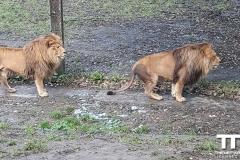Olmense-zoo-(69)