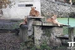 Olmense-zoo-(70)