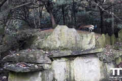 Olmense-zoo-(73)