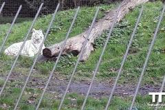 Olmense-zoo-(77)