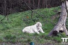 Olmense-zoo-(78)