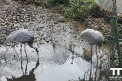 Olmense-zoo-(82)