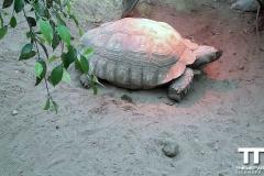Olmense-zoo-(83)