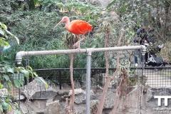 Olmense-zoo-(84)