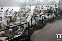 Olmense-zoo-(9)