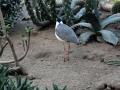 Olmense-Zoo-10-11-2013-(103)