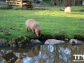 Olmense-Zoo-10-11-2013-(112)