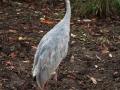 Olmense-Zoo-10-11-2013-(113)