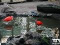 Olmense-Zoo-10-11-2013-(129)
