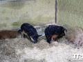 Olmense-Zoo-10-11-2013-(14)