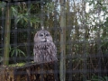 Olmense-Zoo-10-11-2013-(16)