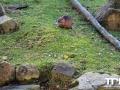 Olmense-Zoo-10-11-2013-(20)