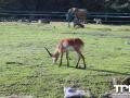 Olmense-Zoo-10-11-2013-(22)