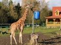 Olmense-Zoo-10-11-2013-(26)