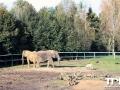 Olmense-Zoo-10-11-2013-(28)