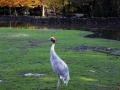 Olmense-Zoo-10-11-2013-(30)