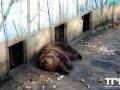 Olmense-Zoo-10-11-2013-(35)