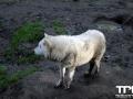Olmense-Zoo-10-11-2013-(36)