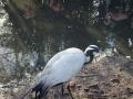 Olmense-Zoo-10-11-2013-(38)