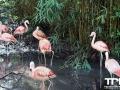 Olmense-Zoo-10-11-2013-(40)