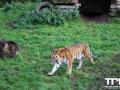 Olmense-Zoo-10-11-2013-(43)
