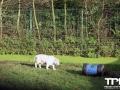 Olmense-Zoo-10-11-2013-(44)