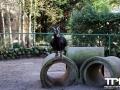 Olmense-Zoo-10-11-2013-(66)