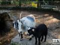 Olmense-Zoo-10-11-2013-(68)